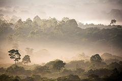 Clima, precipita la capacità delle foreste pluviali di <b>assorbire CO2</b>