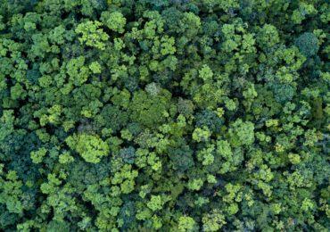 Giornata internazionale delle foreste, ecco come (e perché) dobbiamo proteggerle