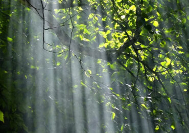 Le foreste africane <b>assorbono</b> più <b>CO2</b>, ma per quanto?