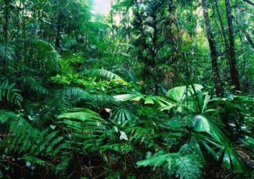 Le foreste <b>assorbono</b> sempre meno anidride carbonica, ed è una pessima…