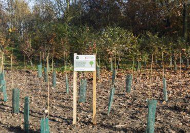 E.ON pianta 500 nuovi alberi a Milano, nel parco urbano del Bosco in Città