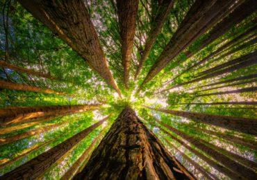 La Giornata nazionale degli alberi va celebrata oggi e sempre