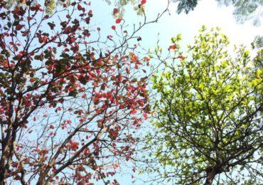 Festa dell'Albero, 1300 nuove piante nel parco del Vesuvio