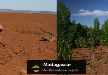 BizAway pianta 60.000 alberi di mangrovia grazie alle donazioni dei suoi clienti
