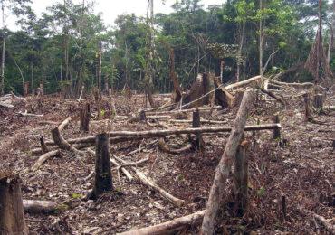 La Foresta Amazzonica sta producendo più <b>CO2</b> di quanta ne riesca ad assorbire