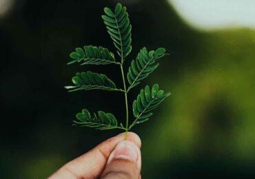 <b>Catturare</b> e riciclare l'anidride carbonica: nuovi paradigmi di sostenibilità - TRIESTE.news