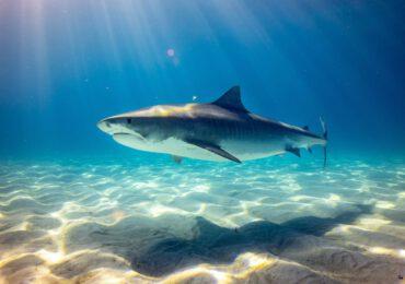 I benefici degli squali tigre per il cambiamento climatico - newsby